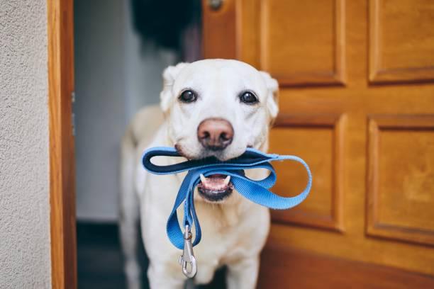 Dog waiting for walk picture id1159809498?b=1&k=6&m=1159809498&s=612x612&w=0&h=bxhajddaob7b x2ynckpzdh69j702kr veid3scmff4=