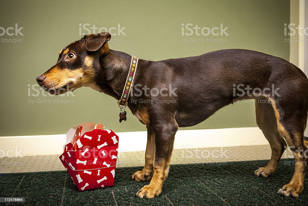 Dog Waiting To Eat royalty-free stock photo
