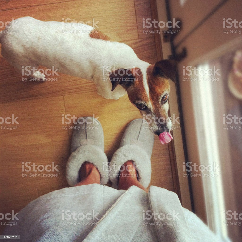 Dog waiting to go outside stock photo