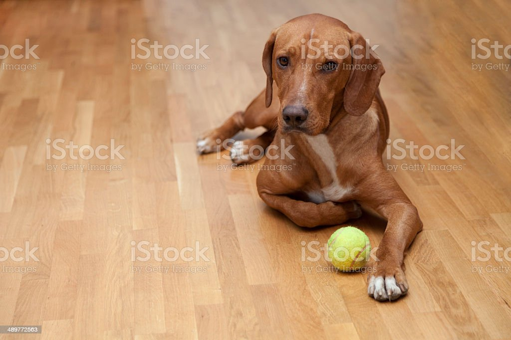 Dog waiting to play stock photo