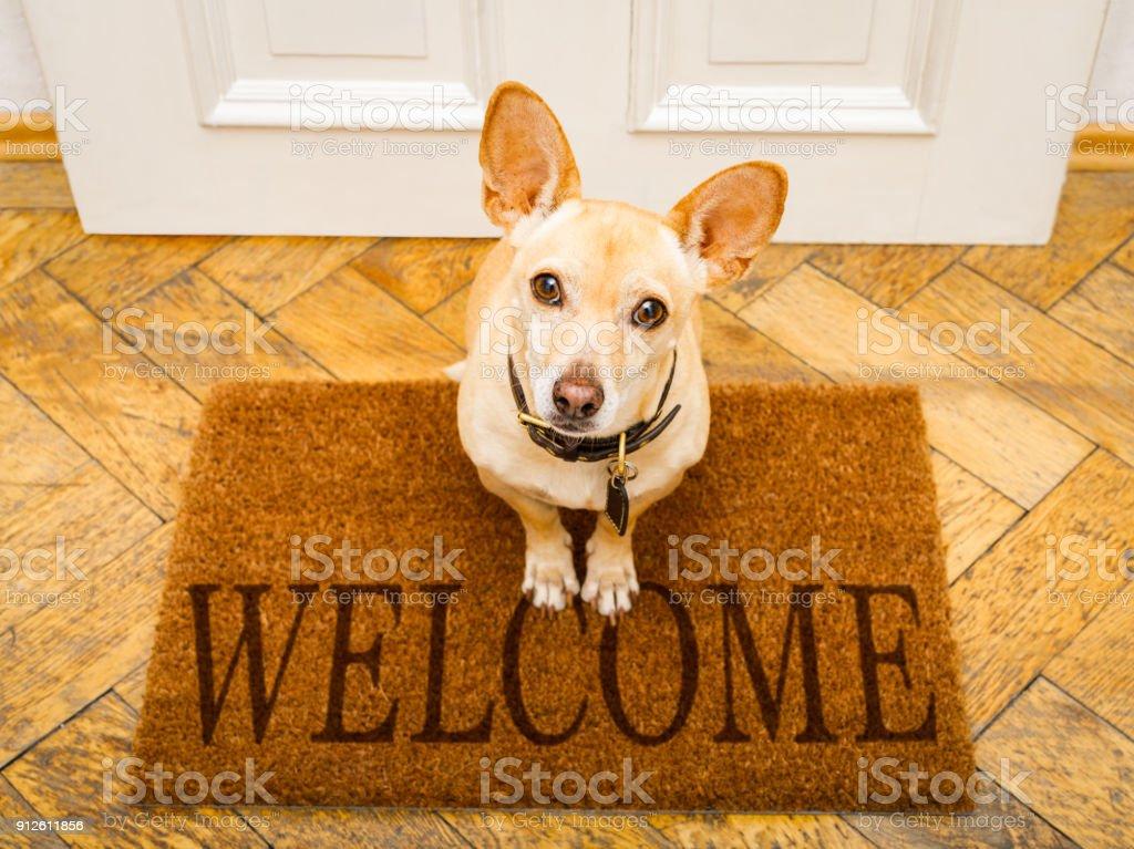 Hund wartet an der Tür für einen Spaziergang – Foto
