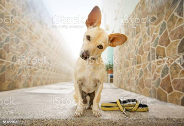 Dog waits for a walk picture id881229342?b=1&k=6&m=881229342&s=612x612&h=wk ica5rcatd6hmisaron4kofzskl6yax3zgvppdd g=