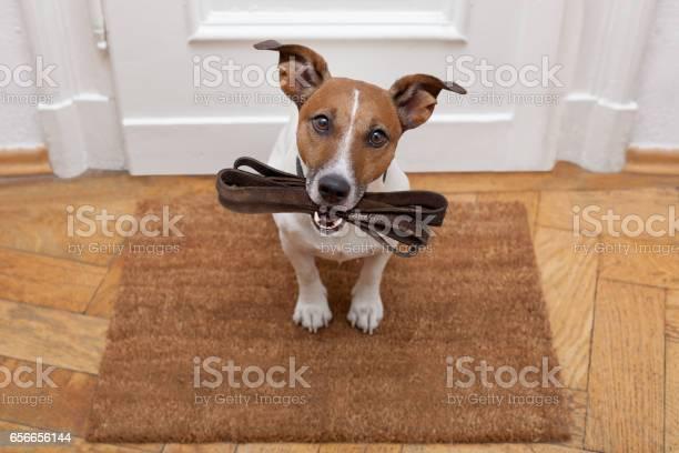 Dog waits for walking with leash picture id656656144?b=1&k=6&m=656656144&s=612x612&h=dljt5 b3w9qgxm9 ahhyzuddsovuhrxtikoutiuk6g0=