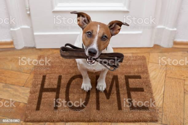 Dog waits for walking with leash picture id658284982?b=1&k=6&m=658284982&s=612x612&h=u 3519awugmhrqeysjbneadqnagfc30v3zd3l olad8=