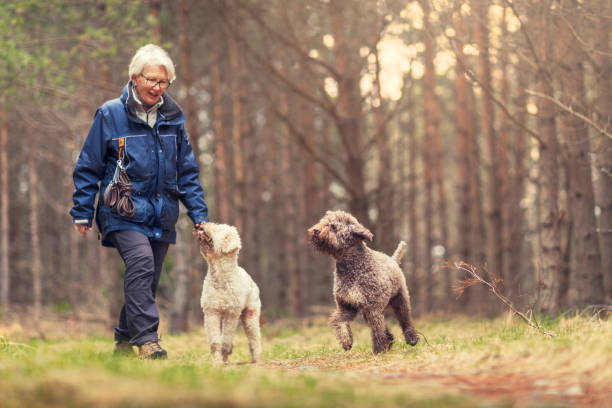 Dog walk in the forest picture id917158900?b=1&k=6&m=917158900&s=612x612&w=0&h= etconyb4ahksulglal0dgnbax29frxhnca k nsufg=