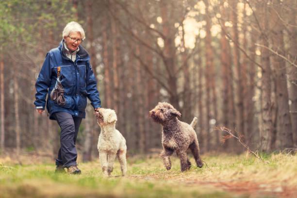 hond wandelen in het bos - bos spelen stockfoto's en -beelden