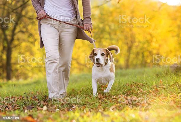 Dog walk picture id460529239?b=1&k=6&m=460529239&s=612x612&h=7nixrlcbpz47xfi2sc9cgq cfzoeikrslbiyyd gtbs=