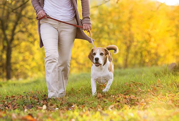 Dog walk picture id460529239?b=1&k=6&m=460529239&s=612x612&w=0&h=fmxjqmvy5kgsqgsdzmsprrc0wmfzpjplcvigitfzau0=