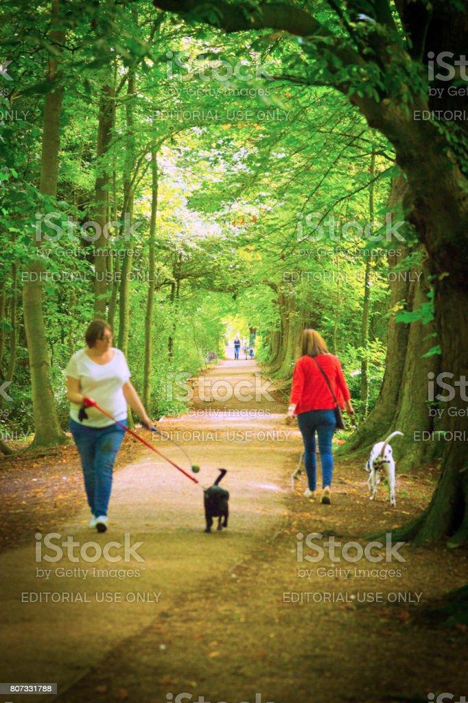 Dog walk stock photo