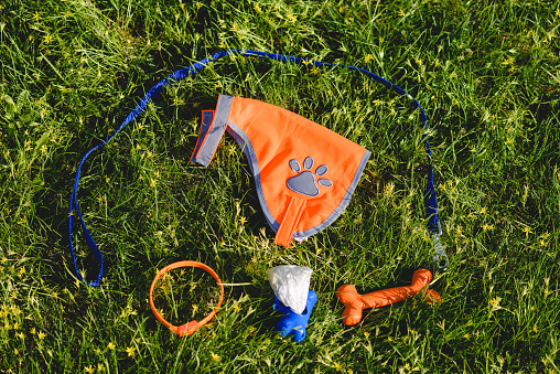 Everything you need for dog walking