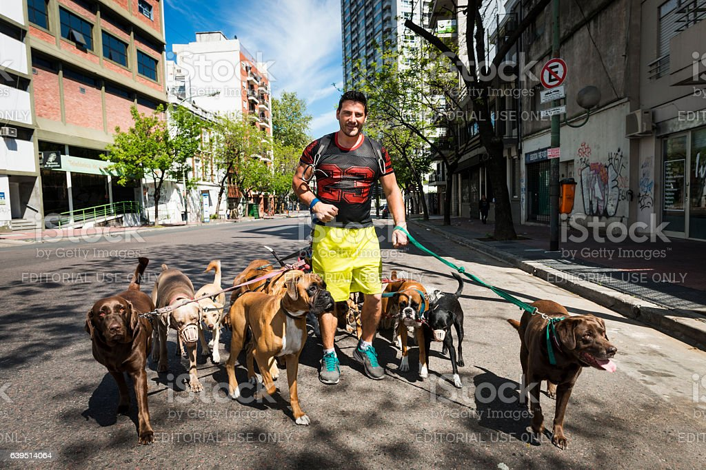 Dog Walker in Buenos Aires, Argentina stock photo
