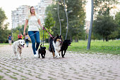 Dog walker enjoying outdoors in park with group of dogs.