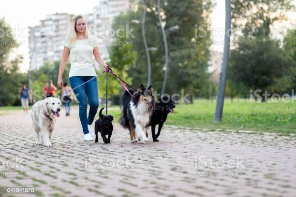 Dog walker picture id1041041828?b=1&k=6&m=1041041828&s=612x612&h=omyc jbo pth 1tkwgslgqlzsvieh3zleqbnzxjhow8=