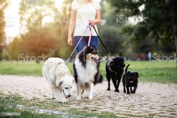 Dog walker picture id1126947324?b=1&k=6&m=1126947324&s=612x612&h=47weapzrsdfdvd2p8i4lxhfuxjuicndgcuj5dpl6fhi=