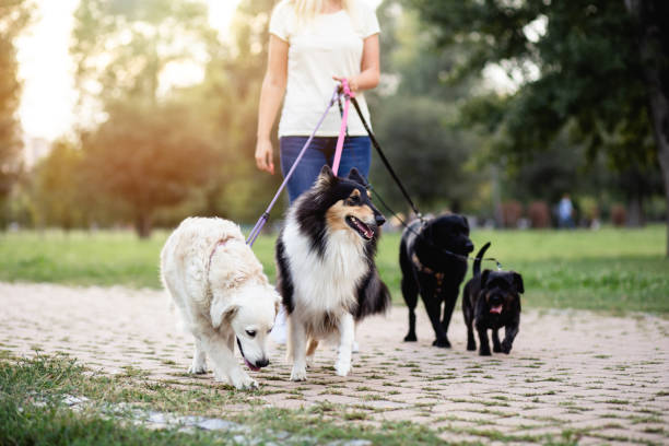dog walker - take care of your jeans imagens e fotografias de stock