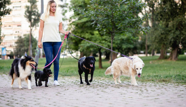 dog walker - side hustle stock pictures, royalty-free photos & images