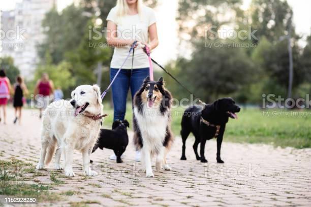 Dog walker picture id1152928280?b=1&k=6&m=1152928280&s=612x612&h=pee2yea5l1wmwc8bgl 9f5p6g3i g2kzcea6ugbulhs=