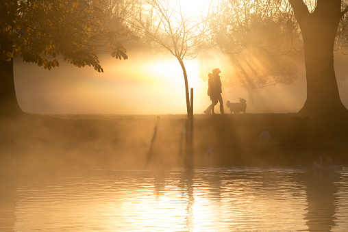 dog walkers in front of lake in early morning light with trees and shafts of light in the background