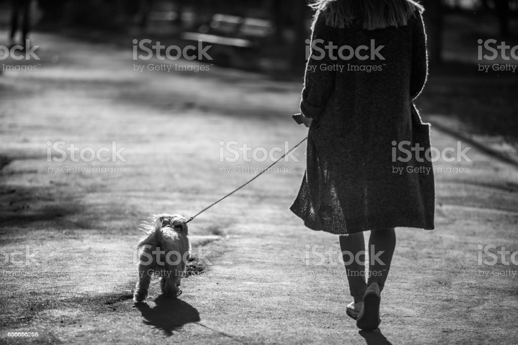 Dog walking in black and white stock photo