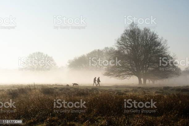 Dog walking in park on misty morning picture id1131773069?b=1&k=6&m=1131773069&s=612x612&h=musxd31ntrtb qflliotfef1mjyl7ss4wm9nuvp7kba=