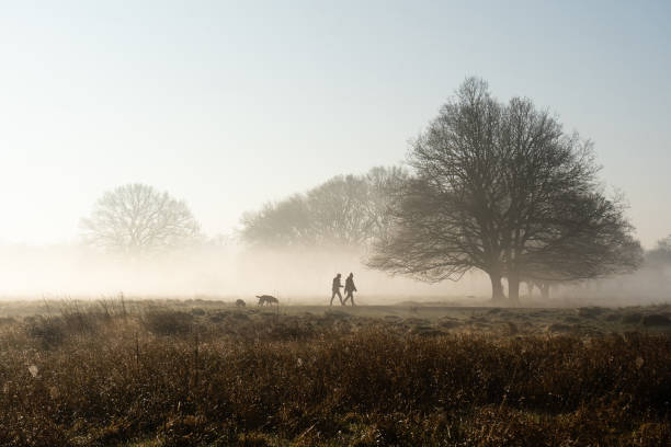 Dog walking in park on misty morning Dog walking in misty park with frosty fields and sunrise in winter, Royal Bushy Park, London rural scene stock pictures, royalty-free photos & images