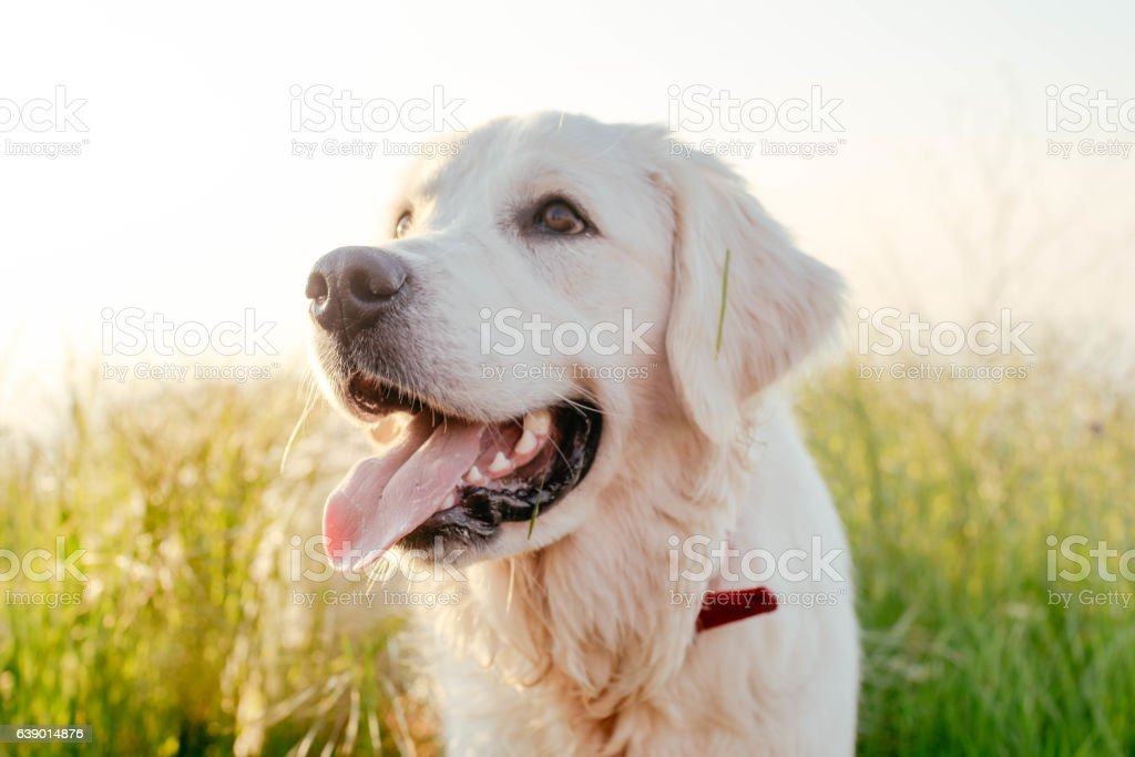 dog walking in park stock photo