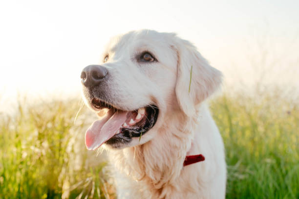 dog walking in park stock photo