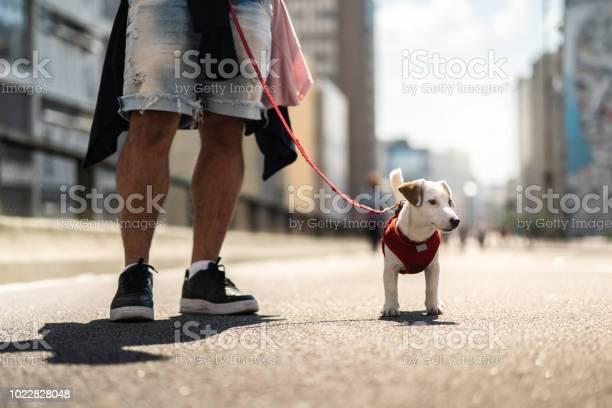Dog walking in the city picture id1022828048?b=1&k=6&m=1022828048&s=612x612&h=vinsfyrl0msfgrbay4ko1ucxbt6dtqp8shqeumjzqry=