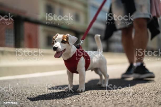 Dog walking in the city picture id1027876184?b=1&k=6&m=1027876184&s=612x612&h=jickwzwhonmgaqpctri outvo08phv4 e 5pxrqrtsc=