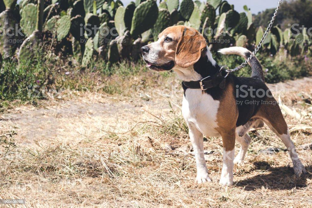 Dog walking on a sunny day stock photo