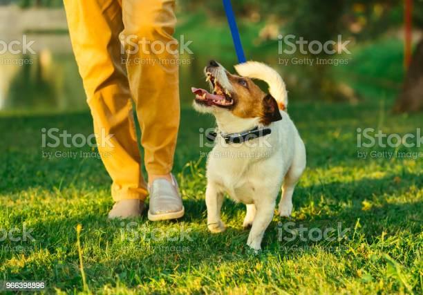 Dog walking on leash with woman during evening stroll at park picture id966398896?b=1&k=6&m=966398896&s=612x612&h=tkmdi6xumaruawzqm c8sarcxzdpgt1u1rvyhh1unxc=