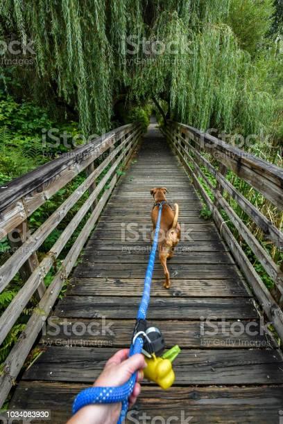 Dog walking picture id1034083930?b=1&k=6&m=1034083930&s=612x612&h=nzdzivjyc qjqw0 v9lk87kkyk2xxr2ncrhzi8wxkzg=