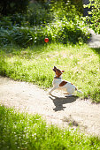 A dog on nature plays with a ball, a dog catches a ball. Walked with a dog during quarantine. dog plays in the garden