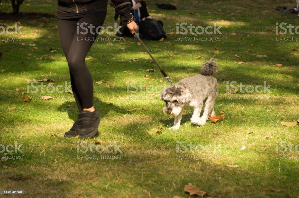 Dog walking stock photo