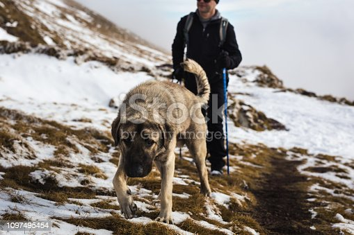 istock Dog walks in nature with owner 1097495454