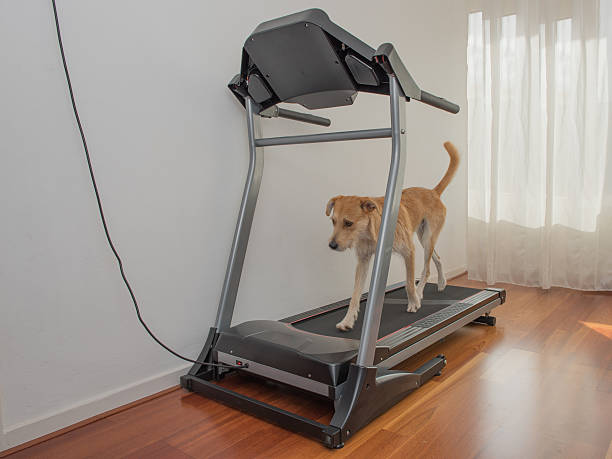 Dog walks on treadmill picture id494084666?b=1&k=6&m=494084666&s=612x612&w=0&h=yd9beatn gdl5cnwgtz6i82of0o31krby9otywupk5k=