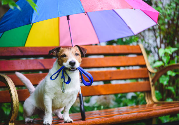 Hond wil gaan voor wandeling zittend op bankje onder kleurrijke paraplu tijdens de regen foto