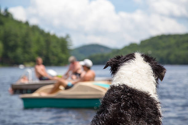 Dog watches activity on the lake stock photo