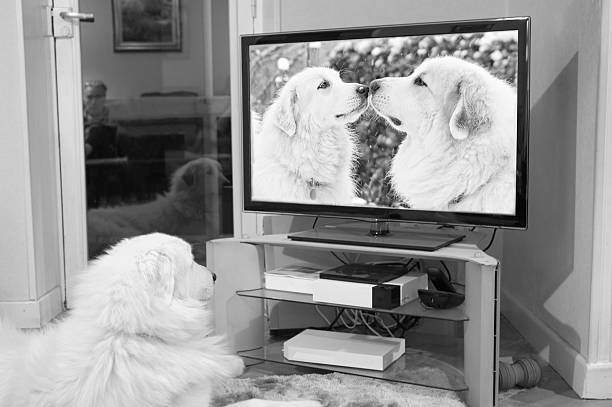 Dog watches romantic canine couple on TV stock photo