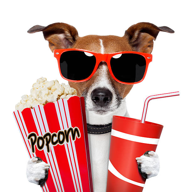 Dog watching a movie picture id148428686?b=1&k=6&m=148428686&s=612x612&w=0&h=1h2g2ujr4ciwvozzr1b4zk7448ctqsuewozaxtt8ikc=
