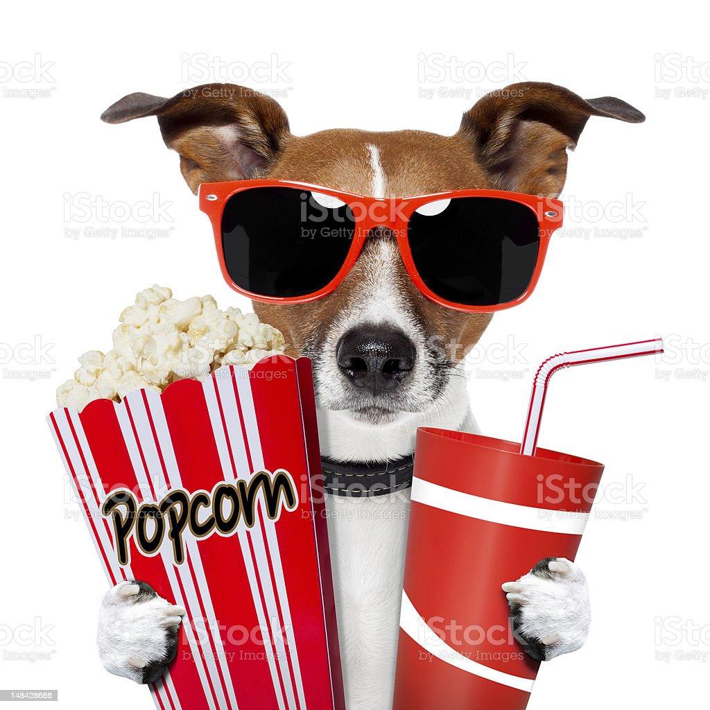 dog watching a movie stock photo
