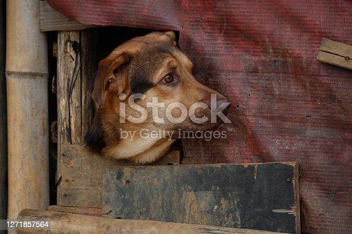 A dog watching