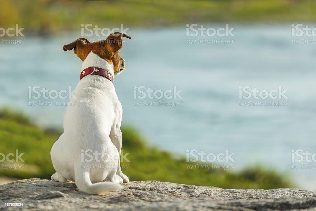 dog watching stock photo