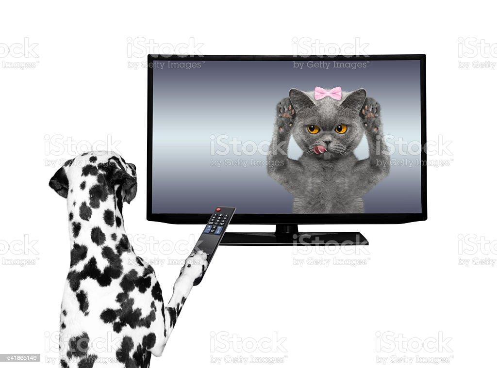 Dog watching television foto de stock libre de derechos