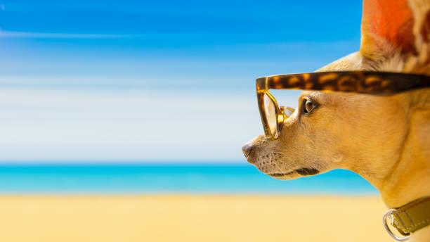 hund am strand im sommer beobachten - sprüche über reisen stock-fotos und bilder