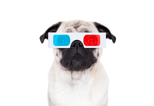 istock dog watching the  movies 867387036