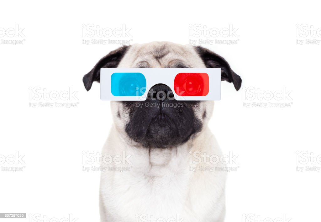 dog watching the  movies stock photo