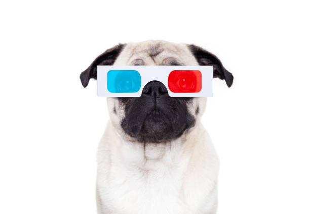 dog watching the  movies stock photo