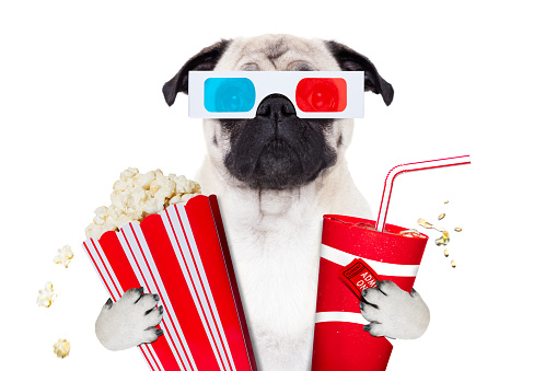 istock dog watching the  movies 867387288