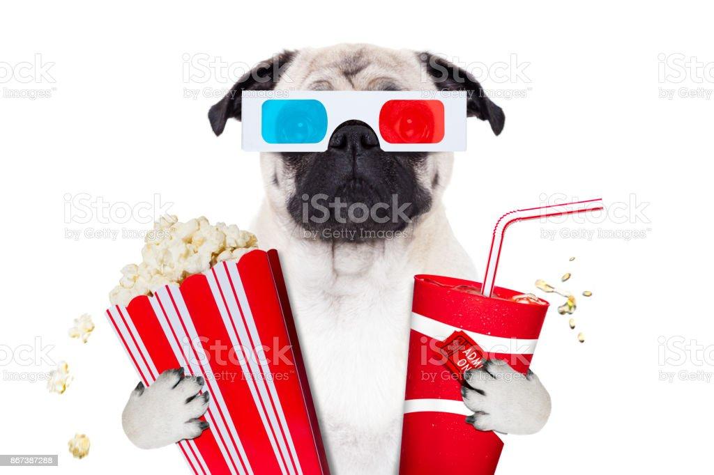 Hund der Filme – Foto